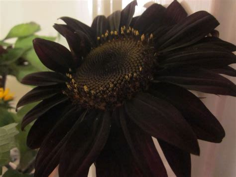 black flower am especially fond of our farmshare when