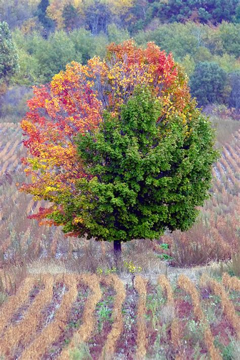 tree changing color photograph by jennifer richards