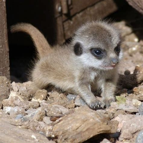20 Super Cute Baby Animals - Page 8 of 22