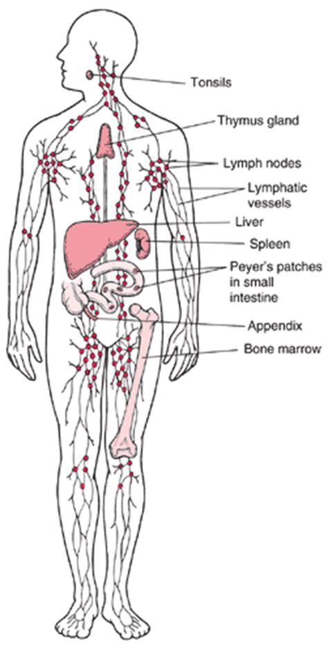 lymphatic system lymphangiomatosis gorhams