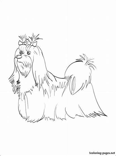 Maltese Coloring Pages Dog Printable Drawing Breed