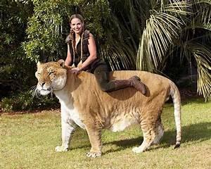 20 animaux géants qui existent vraiment – le numéro 9 vous ...