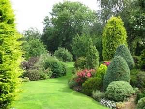 evergreen border shrubs evergreen borders yard pinterest