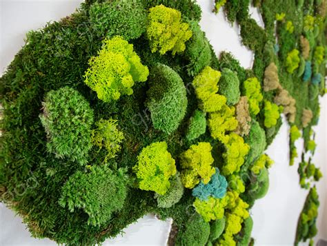 green mood flat  ball moss forest green wall