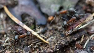 Mittel Gegen Ameisen Im Rasen : lassen sich ameisen mit kr uterpflanzen vertreiben wohnen ~ Watch28wear.com Haus und Dekorationen