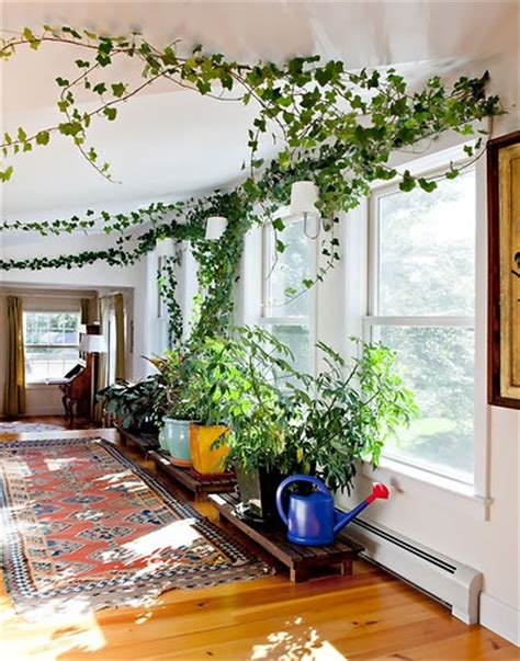 Bring Climbing Vines Indoor And Make Your Home Look Like A