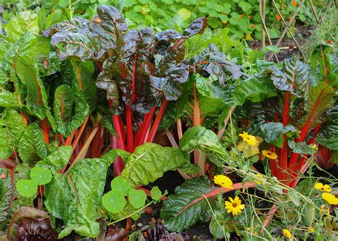 fall vegetable garden why fall is the best time to grow a vegetable garden