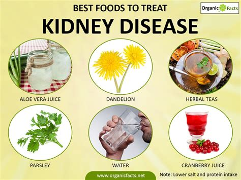 kidney disease treatment diet failure chronic dialysis diseases treatments health salt intake signs body source