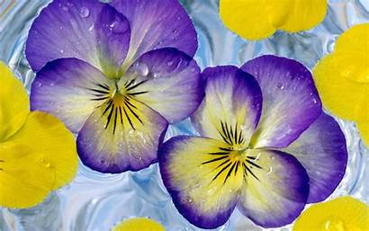 Purple Yellow Flowers Flower Wallpapers Flores Backgrounds
