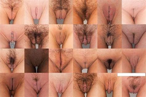Pussy Types Photo Album By Kzdosampa