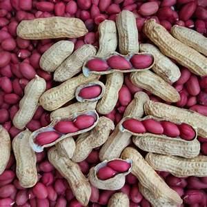 Egrow 10pcs/Bag Peanuts Seeds Arachis Hypogaea Seeds ...