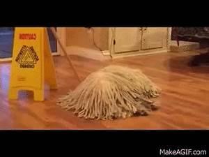A dog that looks like a mop on Make a GIF