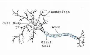 Images of blank neuron cell diagram golfclub neuron diagram printable blank prokaryotic cell diagram ccuart Images