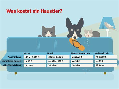 Was Kostet Es by Was Kostet Ein Haustier Ein 220 Berblick Sparkasse De