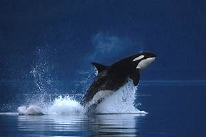 The Other Side: 10 things that I love: #8: The Orca