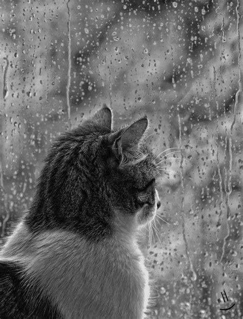 window rain rain   weather