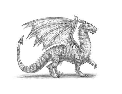 dragon animalstodraw