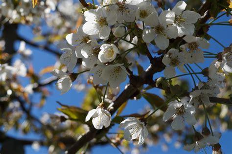 Free Images : tree branch fruit flower bloom food