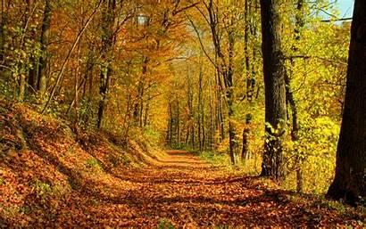 Nature Desktop Autumn Season Fall Backgrounds Background