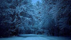 Winter, Forest, Wallpapers, Night