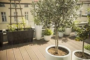 Balkon Bäume Im Topf : olivenbaum alles zum pflanzen pflegen berwintern plantura ~ Frokenaadalensverden.com Haus und Dekorationen