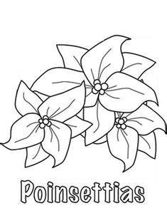 poinsettia images poinsettia poinsettia flower