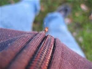 Mücken Vertreiben Hausmittel : hausmittel gegen m cken ~ Markanthonyermac.com Haus und Dekorationen