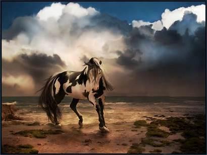 Wild Horse Desktop Background Wallpapers Animal Wallpapersafari