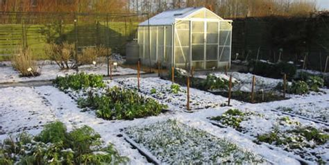 Best Winter Crops And Cold-hardy