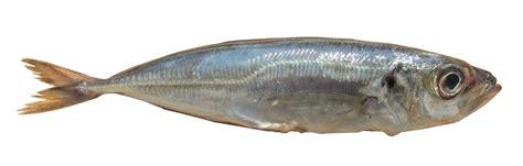 cuisine rouget les poissons cuisine à l 39 ouest