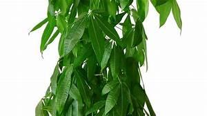 Plante D Intérieur Haute : plante d 39 int rieur entretien facile pas ch re ~ Dode.kayakingforconservation.com Idées de Décoration