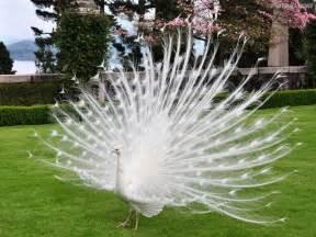 Résultat d'images pour oiseaux magnifiques