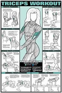Triceps Female Diagram