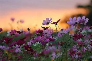 flower nature sunset beauty background wallpaper ...