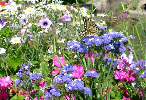 libro sui fiori 22 giugno 2007 oltre il cancello