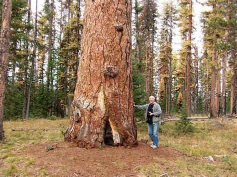 Northwest Montana's Photo Gallery | Trees for Life Montana