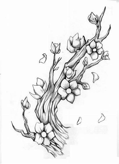 Blossom Cherry Sakura Deviantart Bunga Drawing Tree