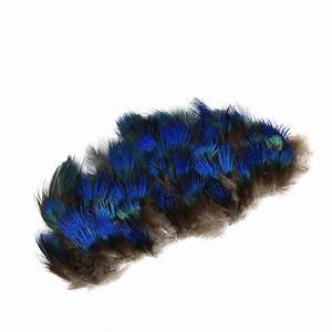 Peacock Feather Plumage-Blue - Natural - Plumage - Peacock ...