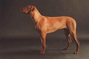 Diagram Of Dog Body