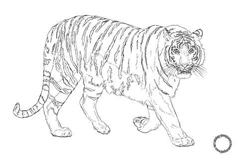 Coloring Harimau by Gambar Mewarnai Princess Coloringpages Asia