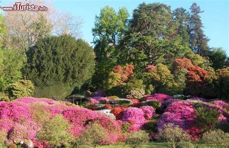 giardini terrazzati immagini azalee nei giardini di villa carlotta aprile foto