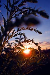 Nature Sunset Photography
