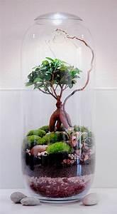 Terrarium Plante Deco : 25 best ideas about mini terrarium on pinterest ~ Dode.kayakingforconservation.com Idées de Décoration