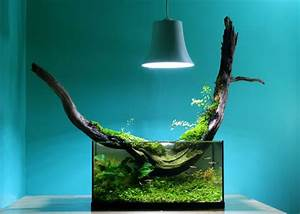 Coole Aquarium Deko : die besten 25 nano aquarium ideen auf pinterest s wasseraquarienpflanzen aquarium und betta ~ Markanthonyermac.com Haus und Dekorationen
