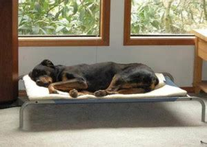 38612 coolaroo pet bed arthritis in dogs and cats our 10 point plan will help