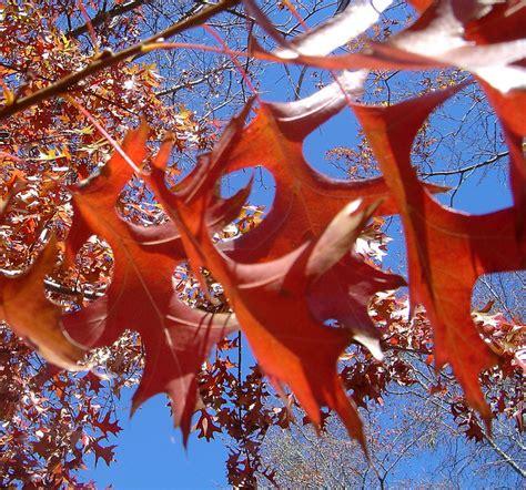 Dsc02652 Autumn Leaves