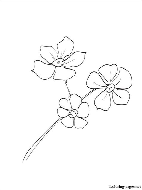 forget  nots coloring page coloring pages