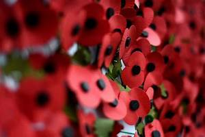 When to stop wearing a poppy after Remembrance Sunday ...