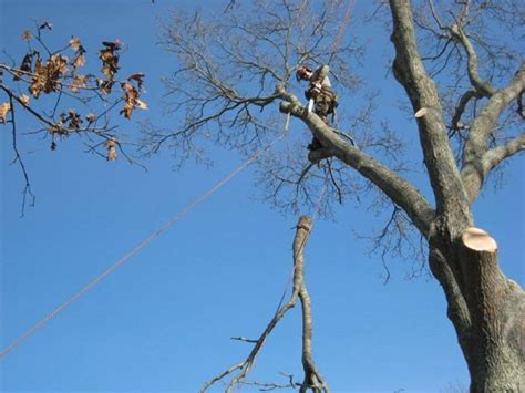 Cape Cod Tree Removal - Photos of TreeFrog Tree Service