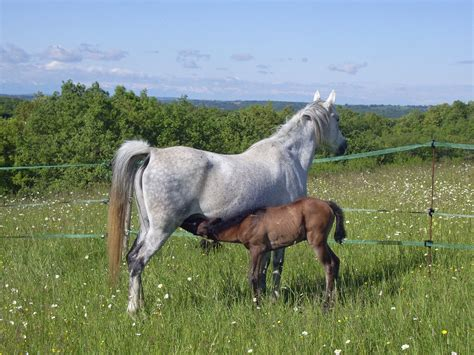 horse horses animals meadow animal mare equine breast pasture stallion milk steppe prairie mammal broodmare grazing grassland fauna foal herd